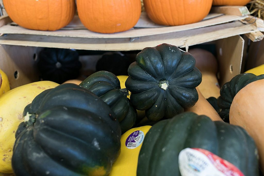 acorn squash types of winter squash Ward's Supermarket Gainesville FL